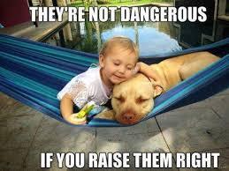 Theyre not dangerous - dog meme   Funny Dirty Adult Jokes, Memes ... via Relatably.com