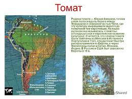 Презентация на тему Доклад на тему Растения путешественники  5 Родина томата Южная Америка
