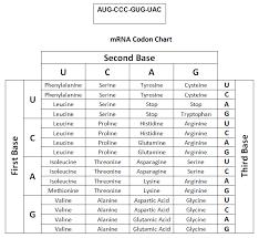 Codon Chart Circle Untitled Document