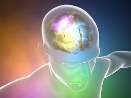 Kết quả hình ảnh cho meth and brain