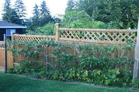 Did You Know You Can Have Fruit Trees Growing On Your BalconyGrowing Cordon Fruit Trees