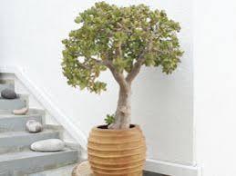 Best healthy indoor house plants