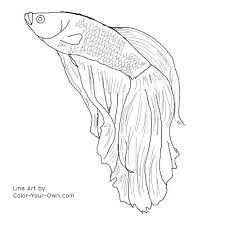 Small Picture Betta Fish Coloring Page Free Download