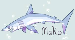 mako shark drawing. Unique Mako Itu0027s Shark Week Biatches Starting With My Favorite Shark The Shortfin Mako  Iu0027ll Have Another One Drawn Up For The Day Iu0027ve Missed So Far To Mako Shark Drawing S
