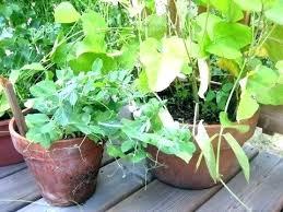 beautiful large container gardening garden large outdoor pot plants uk