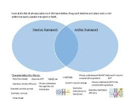 Active Vs Passive Transport Venn Diagram Passive Active Transport Digital Venn Diagram By Sciencerush Tpt