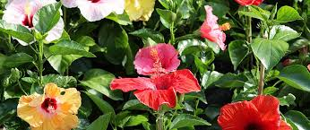 which perennials should you choose for