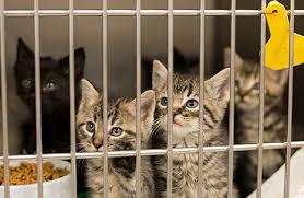 animal shelter kittens.  Shelter Kittens Need Your Help To Animal Shelter O