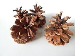 picture of diy pine cone pendant