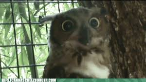 excited animal gif. Perfect Gif FileExcited Owlgif On Excited Animal Gif
