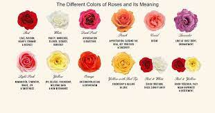 red rose meaning white