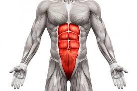 「腹部と筋」の画像検索結果