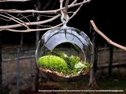 decorating unique outdoor indoor hanging terrarium with glass globe containers featuring weathered wood wall