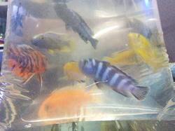 fresh water aquarium fishes