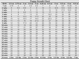 Staffy Puppy Weight Chart Staffy Growth Chart Images Free Any Chart Examples