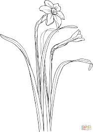 Coloriage Fleur De Narcisse Coloriages Imprimer Gratuits