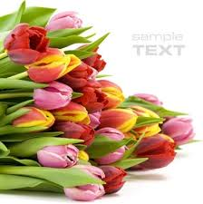 bunch of flowers images free stock