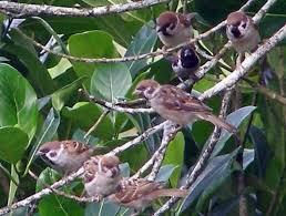 Tafsir Mimpi Melihat Burung Gereja Banyak Angka Jitu Pool303