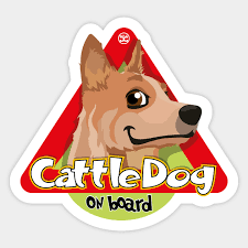 Cattle Dog Weight Chart Cattle Dog On Board Red