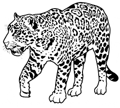 Jaguar Coloring Sheet Jaguar Coloring Page Animals Town Animals