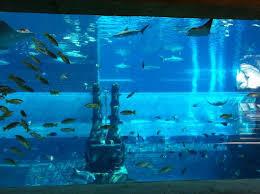 underwater water slide. Beautiful Slide Atlantis The Palm Water Slide Through Shark Tank A Must For Underwater Water Slide