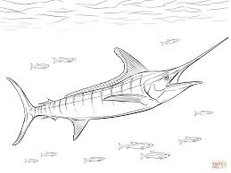 Realistic Atlantic Blue Marlin coloring page | Free Printable ...