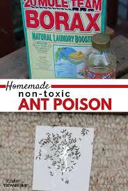 Tiny Black Ants Kitchen 17 Best Ideas About Killing Sugar Ants On Pinterest Sugar Ants