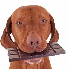 Image result for easter chocolates and dogs