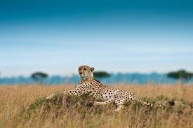cool hunting backgrounds. Cool Animals Desktop Backgrounds: Savannah 100% Quality HD #883395  .Ssoflx Hunting Backgrounds