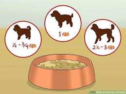 Poodle Feeding Chart How To Care For A Poodle 14 Steps With Pictures Wikihow