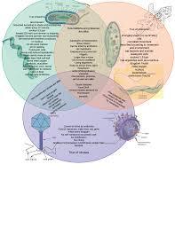 Cell Venn Diagram Cell Vs Virus Venn Diagram Of Manual E Books