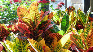 bring oxygen and beauty into your home or office by growing happy houseplants