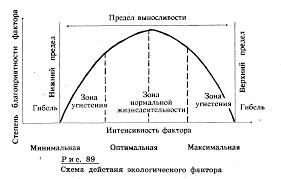 Реферат Биотические и абиотические факторы com Банк  Схема действия экологического фактора