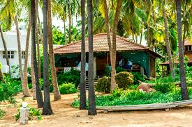 surrounding samarpan guesthouse wandercrumbs s cote samarpan guest house auroville beach cotes pondicherry