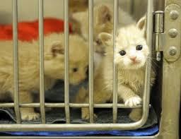 animal shelter kittens. Interesting Shelter File Photo To Animal Shelter Kittens Y