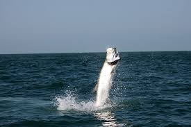 Best Practices For Catch And Release Tarpon Fishing