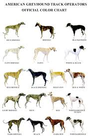 Brindle Color Chart American Greyhound Track Operators Official Color Chart