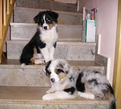 Urteil in nrw hunde dürfen auf waldwegen ohne leine laufen. Treppen Steigen Hundeschule Happy Dog