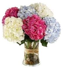 mixed hydrangea arrangement in potomac md ariel potomac florist and gift baskets