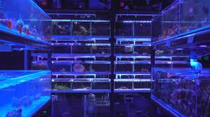 The Aquatic Design Centre The Aquatic Design Centre Shop Tour Balham London Uk