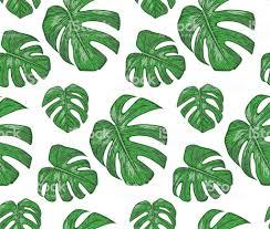 Naadloze Patroon Met Philodendron Planten Groene Bladeren Schattig