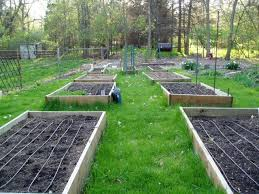 Small Picture 44 best gardens irrigating images on Pinterest Raised bed