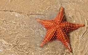 cool facts about starfish