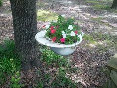 don t throw out that kitchen sink plant it mine is in the back