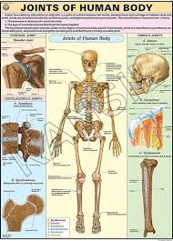 Body Chart Joints Of The Body For Human Physiology Chart