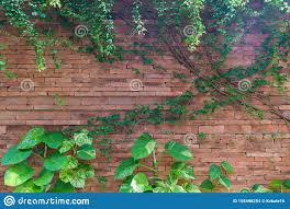 Herb Wall, Plant Wall, Natural Green ...
