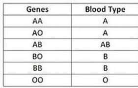 How To Determine Your Blood Type Trinity Holistic Wellness