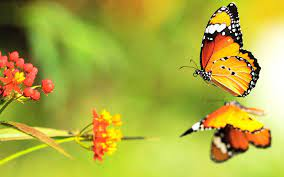 Wallpaper: Butterfly Wallpaper