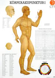 Acupuncture Chart Poster Poster Anatomical Chart Body Acupuncture I