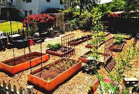 best vegetable garden layout ideas and